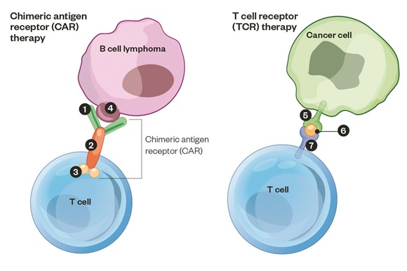 img-CAR-T Cell Therapy